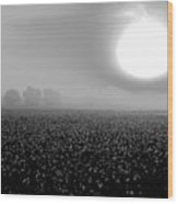 Sunrise And The Cotton Field Bw Wood Print