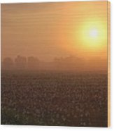 Sunrise And The Cotton Field Wood Print