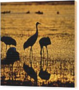 Sunrise At The Crane Pools Wood Print