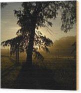 Sunrise Behind Elm Tree Wood Print