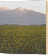 Sunrise Bursting Over The Kamnik Alps And Rapeseed Wood Print