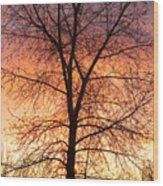 Sunrise December 16th 2010 Wood Print by James BO  Insogna