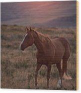 Sunrise Horse Wood Print