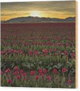 Sunrise In Skagit Valley Wood Print