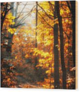 Sunrise Mist Through The Trees Wood Print