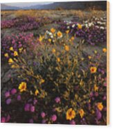 Sunrise On Desert Wildflowers Wood Print
