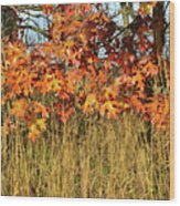 Sunrise On Oaks In Glacial Park Wood Print
