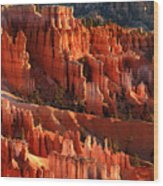 Sunrise On The Hoodoos Of Bryce Canyon National Park Wood Print