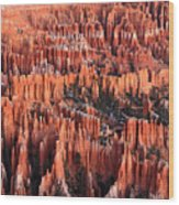 Sunrise On The Hoodoos Of Bryce Canyon Wood Print