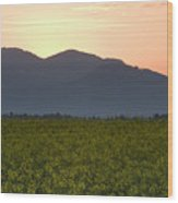 Sunrise Over The Kamnik Alps And Rapeseed Wood Print