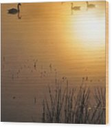 Sunrise Swim Wood Print