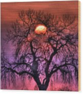 Sunrise Through The Foggy Tree Wood Print by Scott Mahon