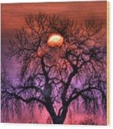 Sunrise Through The Foggy Tree Wood Print