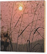 Sunrise Through The Tall Grass Wood Print