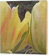 Sunrise Tulips Wood Print
