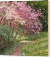 Sun's Grace Wood Print