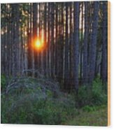 Sunset Along The Florida Trail - St.marks Wood Print