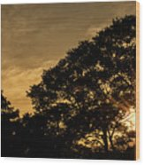 Sunset And Trees - San Salvador Wood Print