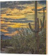 Sunset Approaches - Arizona Sonoran Desert Wood Print