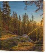 Sunset At Sequoia Wood Print