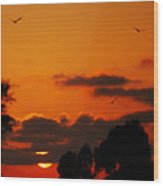 Sunset Birds Wood Print