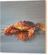 Sunset Crab Wood Print