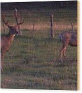 Sunset Deer II Wood Print