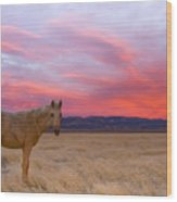 Sunset Filly Wood Print