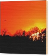 Sunset Flying Three  Wood Print