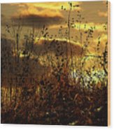 Sunset Grasses Wood Print
