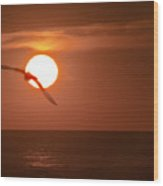 Sunset Gull No.1 Wood Print