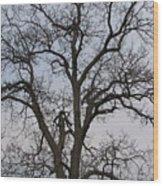 Sunset Hickory Tree Wood Print