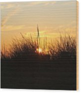Sunset In The Grass Wood Print
