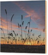 Sunset In The Weeds Wood Print