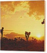 Sunset, Joshua Tree Park, California Wood Print
