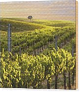 Sunset On A Vineyard Wood Print