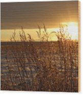 Sunset On Field Wood Print by Christy Patino