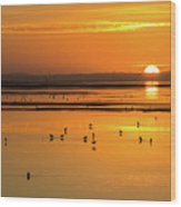 Sunset Over Arcata Marsh, With Avocets Wood Print