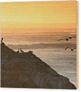 Sunset Pelicans IIi Wood Print
