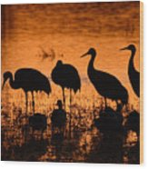Sunset Reflections Of Cranes And Geese Wood Print