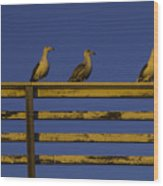 Sunset Seagulls Wood Print