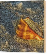 Sunset Seashell Wood Print