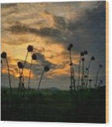 Sunset Silhouettes In June Wood Print