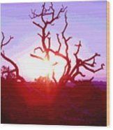 Sunset Through Silhouetted Tree In Desert 2 Wood Print