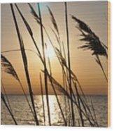 Sunset Through The Dune Grass Wood Print