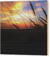 Sunset Through The Sea Grass Wood Print