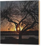 Sunset Through The Tree Wood Print