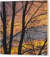 Sunset Through The Tree Silhouette Wood Print