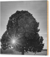 Sunset Tree In Mono Wood Print