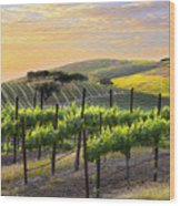 Sunset Vineyard Wood Print by Sharon Foster